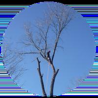 Tree trimming by Les As de la Coupe